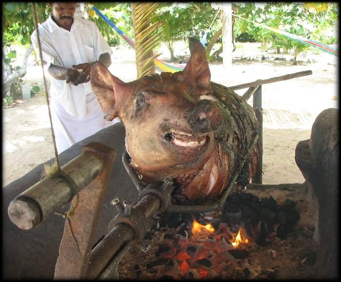 http://www.delargy.com/images/2005_8_Honduras/pig_roast.JPG