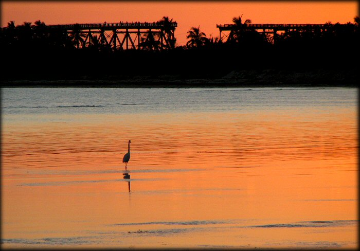 Heron fishing at Bahia Hondo at Sunset. Notice the old train bridge in the background.
