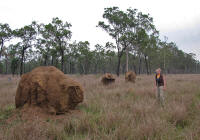 termite-mounds.jpg (168191 bytes)